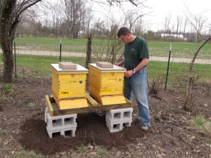 28  IMG_0978TUC CWF hives 400x300