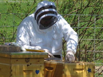 48  IMG_1198 working in hives 400x300