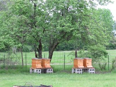 CWF hives