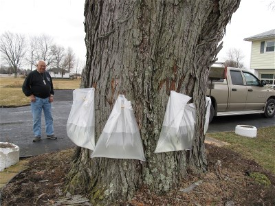 Collecting maple sap at Cathy's Uncle Gayle Rollison's place.