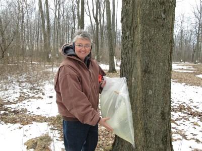 C Rollison Krist collecting sap