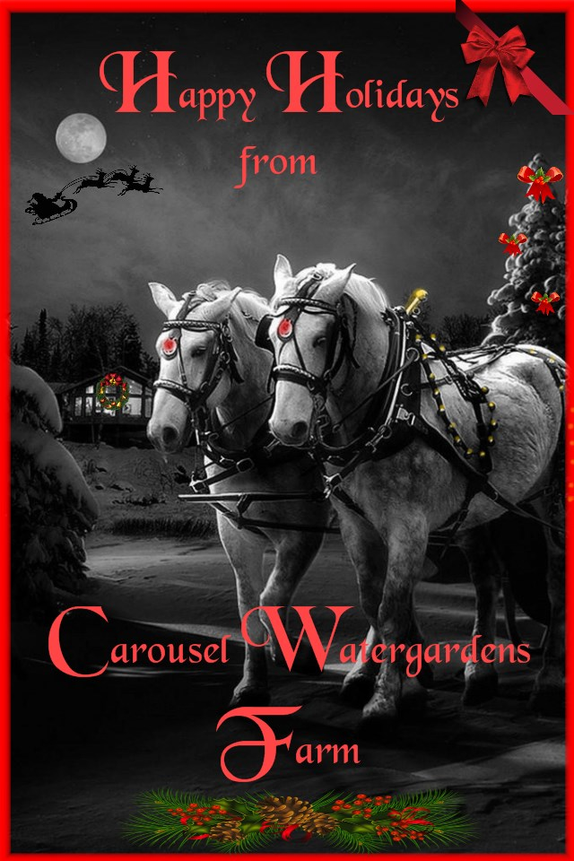 CWFFARM TUBL&wh  percherons by moonlight Happy Holidays red fontwith santa4