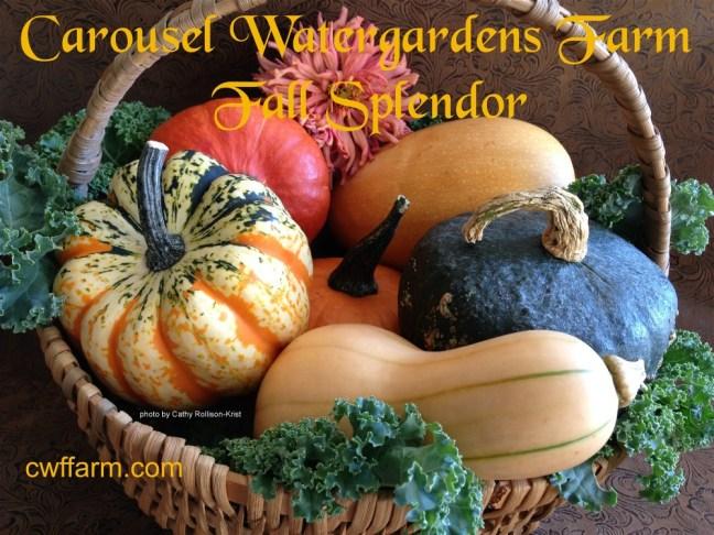 IMG_2828sgnd 1000x750 cwffarm  fall splendor basket of fall squash & kale
