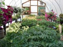 frontpg_greenhouse