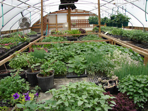 frontpg_greenhouse2