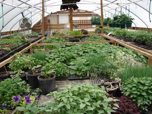 frontpg_greenhouse2