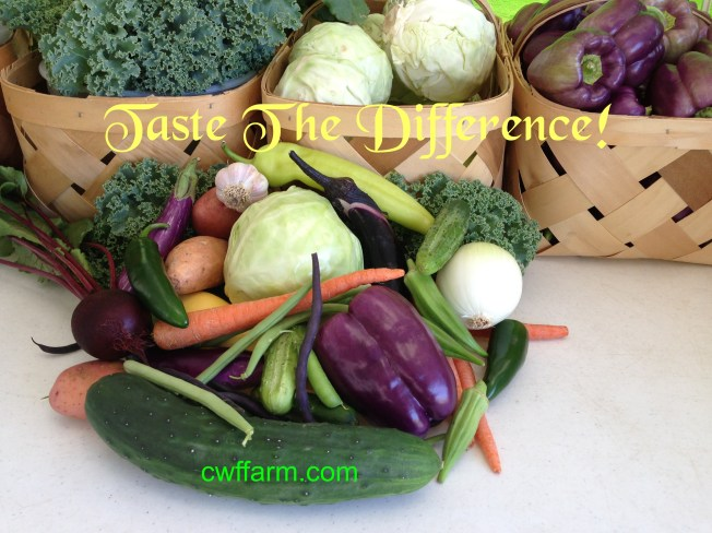 IMG_3678cwffarm vegetable medleytaste difference