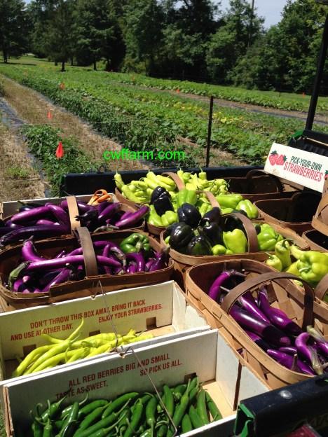 IMG_9590cwffarm summer harvest