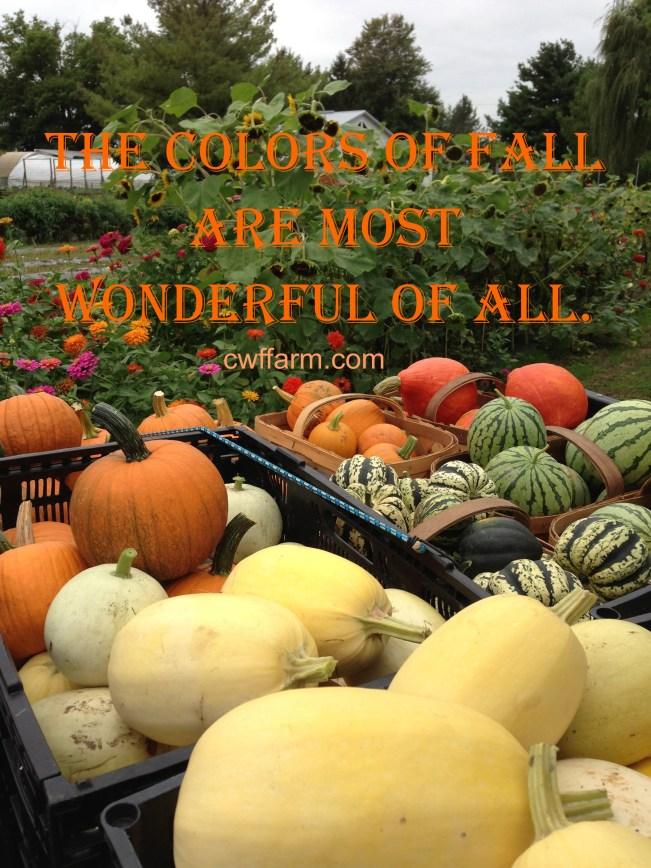 IMG_7634cwffarm colors of fall 2