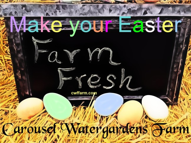 3703A cwffarm farm fresh colored eggs e 03