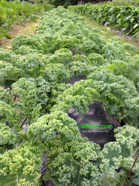 IMG_2797sgnd cwffarm kale row