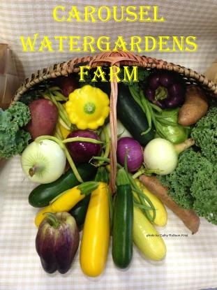 IMG_7801sgndcwffarm melon basket of vegs