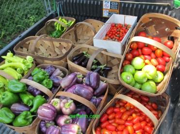 IMG_0597cwffarm Produce in gator