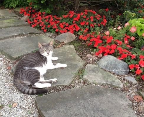 IMG_1158C Charlie cat 2015.JPG