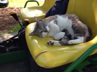 IMG_4999sgnd Charlie Cat on gator