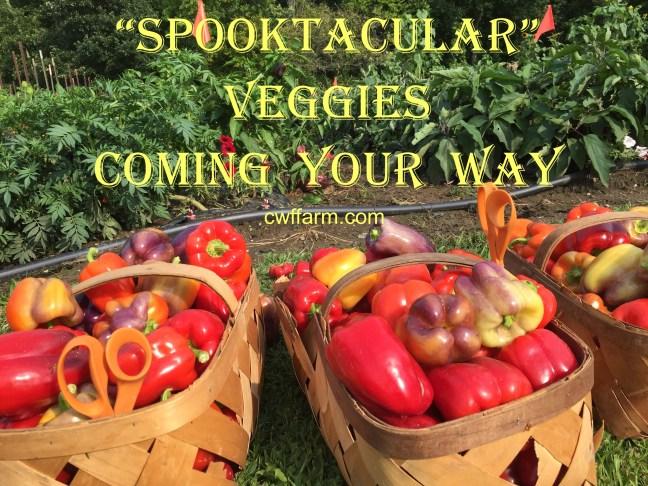 IMG_0399cwffarm spooktacular veggies coming your way