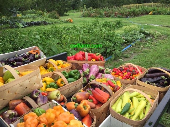 IMG_0759cwffarm rain soaked produce