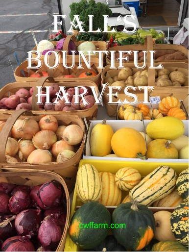 IMG_0868cwffarm falls bountiful harvest