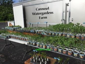 IMG_4997cwffarm trailer & plants