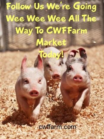 2 Wee Wee Wee to market pigs