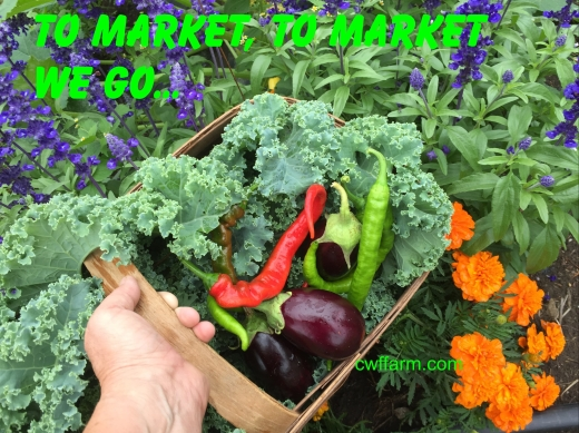 img_9875cwffarm-to-market-we-go-basket-of-vegs.jpg