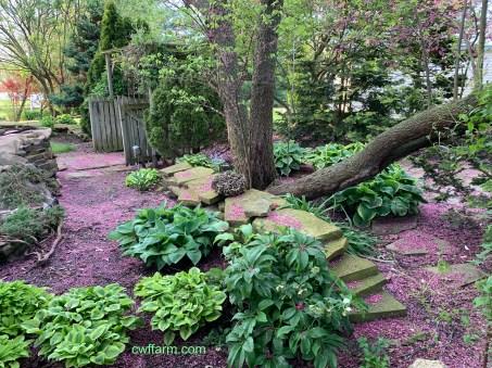 IMG_4231Cwffarm redbud carpeted patio