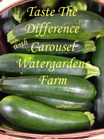 IMG_8301cwffarm zucchini Taste the difference