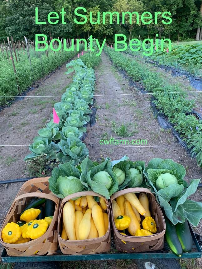 IMG_7514cwffarm Let summers bounty begin
