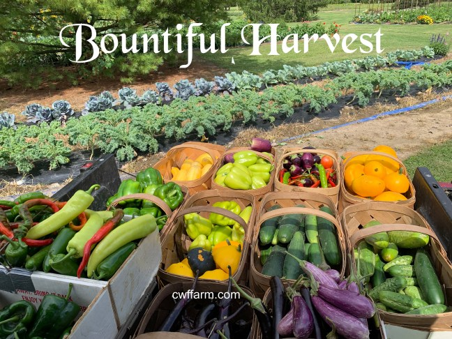 IMG_0669cwffarm bountiful harvest